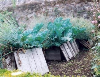 zeekool kweken